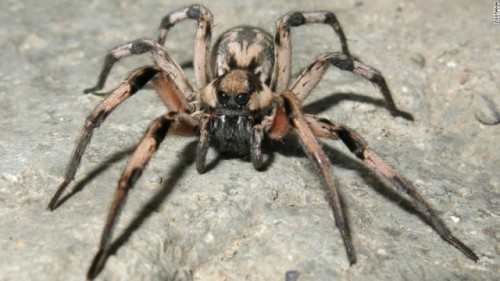 星組 蜘蛛写真